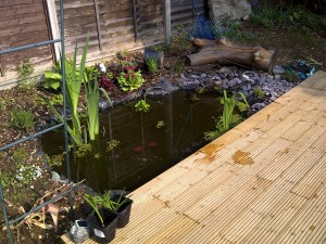 The Pond for the Frogs & Newts